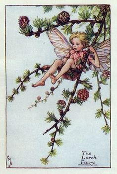 Candytuft Flower Fairy Vintage Print, c.1950 Cicely Mary Barker Book Plate…