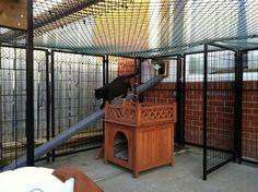 outdoor cat run - I love this idea!!
