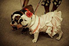 Bulldog Love!!