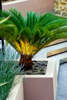 contemporary planting cost of specimen architectural plants