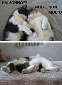 Very in love Kitty couple Cute Cats And Dogs, Animals And Pets, Cats And Kittens, Funny Animals, Cute Animals, Kitty Cats, Beautiful Cats, Crazy Cats, Kittens Cutest