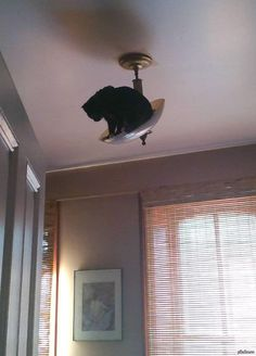 27 Ninja Cats Who Might Actually Have Super Powers (Slide - Pawsome Funny Cat Fails, Cat Memes, Funny Cats, Funny Animals, Cute Animals, Baby Animals, I Love Cats, Crazy Cats, Cute Cats