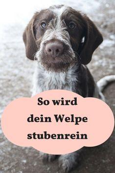 So wird dein Welpe stubenrein. #Welpe #Hunde #Hundeerziehung