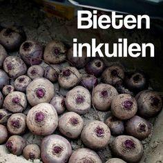 rode biet kroten inkuilen opkuilen bewaren oogst   Dit en nog veel meer op moestuinblog De Boon in de Tuin |  http://deboon.blogspot.nl