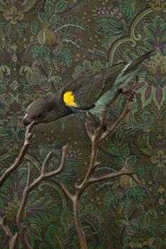 Parrot Wallpaper Designed for Living 9
