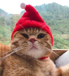 Cat lovers, discover the latest trends gift cat, cat clothing, cat accessories, cat toys for woman and for your cat 🐾. Funny Cat Pictures, Animal Pictures, Cute Pictures, Baby Animals, Funny Animals, Cute Animals, Funny Cat Memes, Funny Cats, Christmas Cats