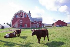 Chandler Pond Farmstand - 600 acre organic farm featuring fruits, veggies, dairy products, meats, flowers & homemade sauces - Open May to Oct | Tue - Sat