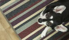 Dog friendly carpet. Photo Jukka Mykkänen.