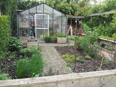 In de kas staan nu nog diverse basilicum, dille, cosmea, rode zonnebloemen en o.a. boontjes. Straks gaat het allemaal weer naar buiten.  Eigen tuin in Varik