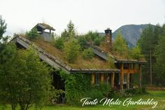 Haus mit Grassodendach in Norwegen Places To See, Cabin, House Styles, Home Decor, Norway, Travel Advice, Places, Viajes, House