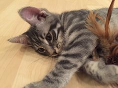 Cats, Animals, Gatos, Animaux, Animales, Cat, Kitty, Animal, Dieren