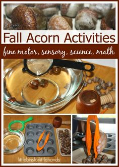 Fall Sensory Play Fine Motor, Science And Math Activities With Acorns  Fine Motor Friday Blog Hop! Simple Fall Sensory Play For Early Learning From The Great Outdoors Fine Motor Fridays is one of my favorite days of the week. Not only do I get to host an awesome blog hop with amazing ladies, ...