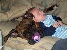 Dog and Baby Nap