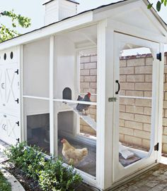 I love this coop. I don't think i would keep it so clean,though!