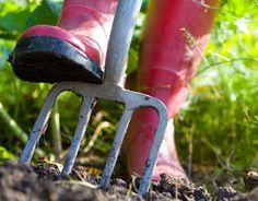 Preparing your in-ground garden
