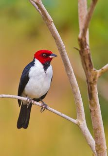 Banco de Imagenes: Aves exóticas (shared via SlingPic)