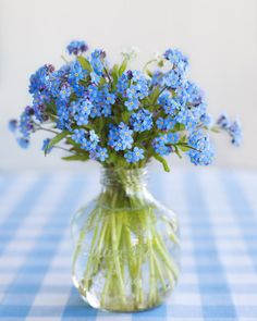 Garden bouquet of forget-me-nots : Meadowbrook Farm: meadowbrook garden
