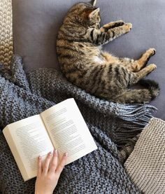 1644 Best Books Images In 2020 Books Crazy Cats I Love Cats