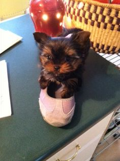 Yes she's real and fits in my moms shoe!