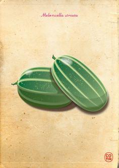 meloncella striata, ortaggi, illustrazione, arte digitale - striped meloncella, vegetables, illustration, digital art