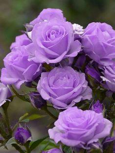 Цветы | Советы по выращиванию и красивые фото на Постиле | Постила