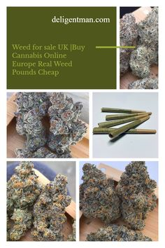 You can now buy weed or cannabis online UK using Paypay, buy weed online with credit card UK, weed for sale UK, buy marijuana in the UK using Paypal. Kush online UK, Hash online UK, 420 mail order UK, Herbal Incense Online uk, THC Prefilled Vape Pen, Mail order Marijuana, Buy Cannabis Online, Buy Weed Online, Weed Butter, Weed Strains, Weed Store, Sale Uk, Vape, Herbalism, Stuff To Buy