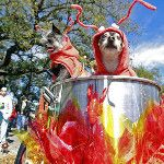 """Hot dogs...""""craw-puppies!"""" Krewe of Barkus parade in French Quarter, New Orleans"""