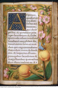 Bible. Gospels. Selections. Latin. Gospel readings for Holy Week : manuscript, [ca. 1510-ca. 1515].