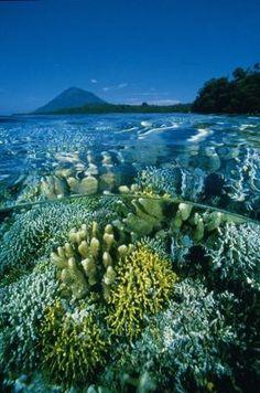 Diving in Sulawesi, Indonesia. Bunaken