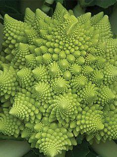 "Italian Heirloom ""Romanesco"" Broccoli seeds"