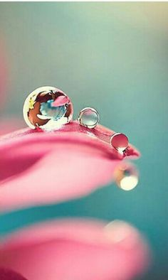 Pink | Pastel | Rosé | Salmon | Peach | Pinku | Rozovyy | Rosa | ピンク | розовый | Rosado | Dew drops