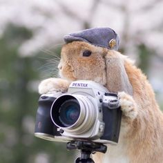 Cute Photographs of Most Stylish Bunny (15)