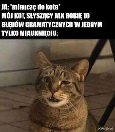 Top Relatable Memes Funny - New Sites 9gag Funny, Funny Jokes, Hilarious, Funniest Memes, Dumb Cats, Funny Cats, Weird Pets, Fat Cats, Memes Humor