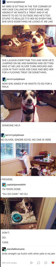 "I'm just glad my dog coco doesn't listen to my parrot. The other day my bird was chatting away and I heard him go ""coco! Fuck off!""<< that's hilarious :) Cute Funny Animals, Funny Cute, The Funny, Best Funny Pictures, Funny Images, Just For Laughs, Animal Memes, Tumblr Funny, Funny Posts"