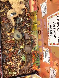 A close up of The Autumn Woods. A tray is needed to hold bark, conkers, sticks and leaves to make the forrest floor. Some large pieces of wood and stones enhance the play and provide different levels in the play. Tuff Tray, Conkers, Town And Country, Eyfs, Interior Design Living Room, Squirrel, Sticks, Kitchen Remodel, Woods