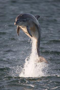 """500px / Foto """"Dolphin"""", de Tony Câmara"""