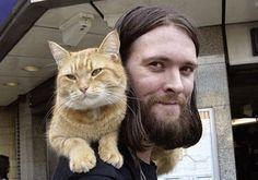 Amore per gli animali Cat Drawing Tumblr, Cat Bobcat, Street Cat Bob, Parakeet Cage, What Cat, Ginger Cats, Cat Names, Nature Animals, Cool Cats