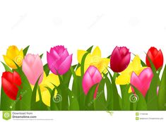 Pink Yellow Spring Tulips Flower Border Stock Photos, Images ...