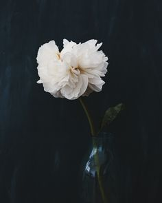 Image of Peony I - 8x10 Print by Alice Gao | found via Sacramento Street