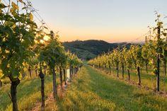 Tipps für Salzburg I 1000things - wir inspirieren Hallstatt, Salzburg, Vineyard, Outdoor, Graz, Road Trip Destinations, Outdoors, Vine Yard