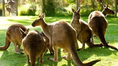 Wildlife and zoos, Yarra Valley & Dandenong Ranges, Victoria, Australia