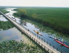 Point Pelee National Park, Ontario - You'll have company at this southwest-Ontario oasis, a rare Carolinian forest in… Beautiful Forest, Most Beautiful, Cross Canada Road Trip, Canadian Forest, Great Lakes Region, Parks Canada, Canadian Travel, Canoe And Kayak, The Good Old Days