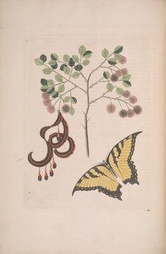 2 - The natural history of Carolina, Florida, and the Bahama Islands : - Biodiversity Heritage Library