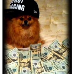 My pom has more swag than you (: