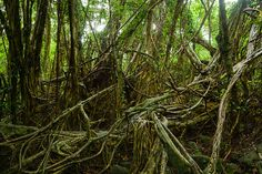 Impenetrable jungle of Japan by ippei + janine, via Flickr