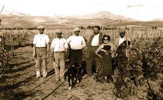 Sin dagli inizi del #secoloscorso #Menfi era una terra votata alla #coltivazione della #vite #storytelling#menfishire#vendemmiestoriche Since the beginning of the #lastcentury #grapes were planted here in #Menfi
