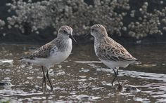 Being a sandpiper: Animals have thoughts, feelings and personality, so why has science taken so long to catch up with animal consciousness?