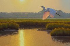Evening Egret (oil, 16×24) by Matthew M. Schulz  #Egret #OilPainting #FineArt