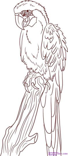 to Draw a Parrot, Step by Step,