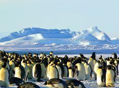 La oferta de distribuciones Linux es muy extensa y cada una está orientada a un perfil de usuario. ¿Cómo elegir entonces la que nos interesa? Linux Distro Picker es una herramienta que nos ayudará a conseguirlo